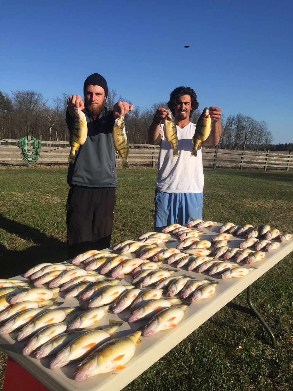 perch fishing, guided fishing